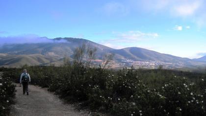 Buschwindrosen und Berge