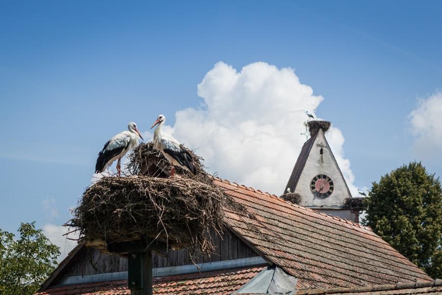 Kultur und Religion - Markgräfler Kirchen und Ihre Besonderheiten