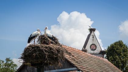 Kirche mit Storchen - Holzen