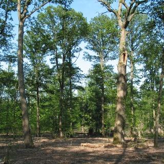 Waldlandschaft an der Neuweiler Viehweide