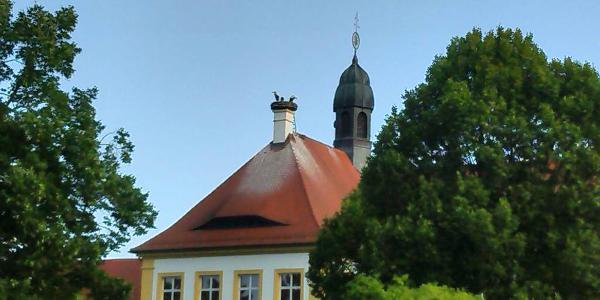 Störche in Gremsdorf