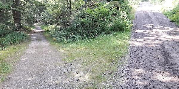 Abzweigung von der Forststraße zum Wanderweg zum Hochfall