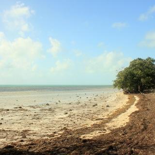 Küstenlandschaft am Long Key State Park