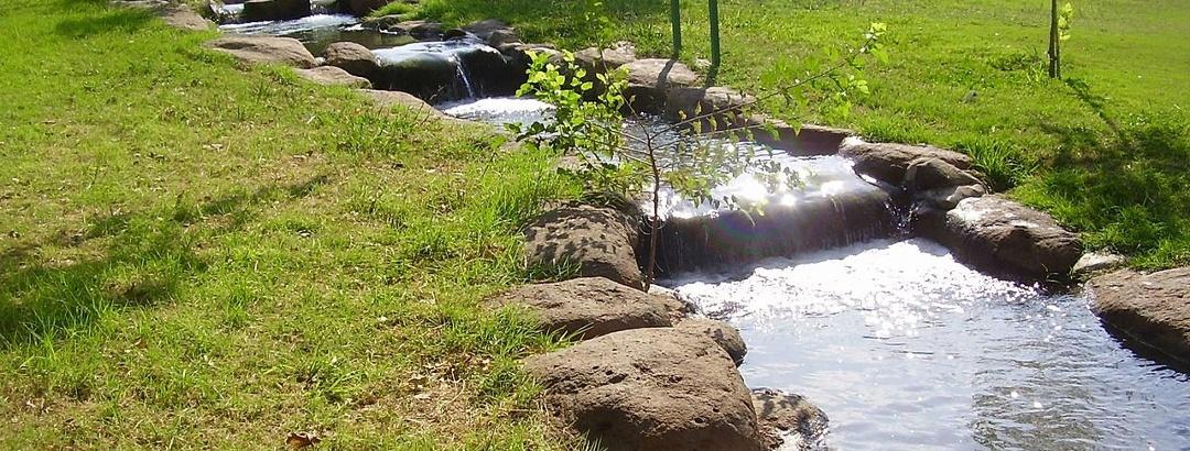 פלג מים עם מפלים קטנים הזורם בחורשה