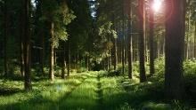 Wanderung rund um Wiesenbronn