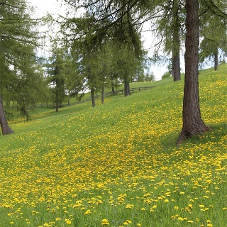 Natura sul Tschöggelberg