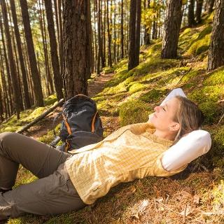 Auszeit im Kiefernwald