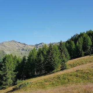 Links die Eidechse, rechts die Steinspitze