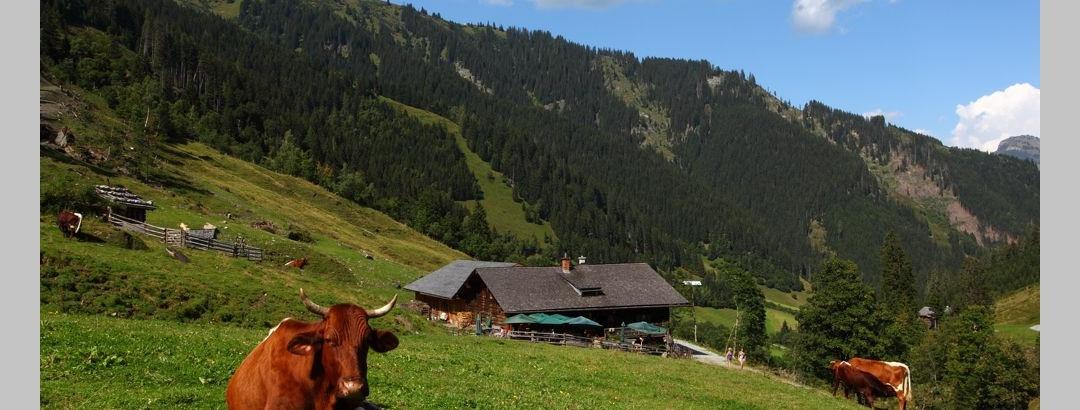 Aigenalm - Paulhütte, 1.280 m