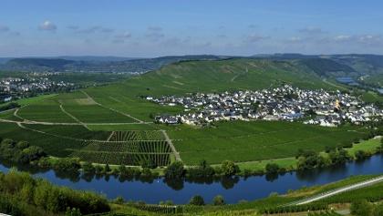 Panoramablick von Leiwen-Zummet auf die berühmte Moselschleife bei Trittenheim und Leiwen