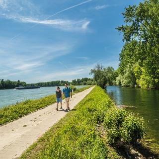 Der Rheinhauptstrom und die Auen