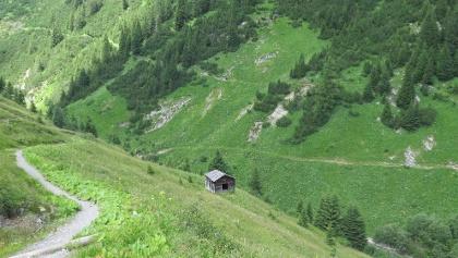 Almwiesen zwischen Warth und Lechleiten