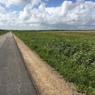Weg zwischen Morsum und Keitum