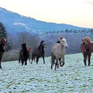 Blick über das winterliche Logebachtal. Hier fühlen sich Isländer und andere Pferderassen wohl.