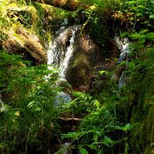 Im Bannwald hoch über der Wehra