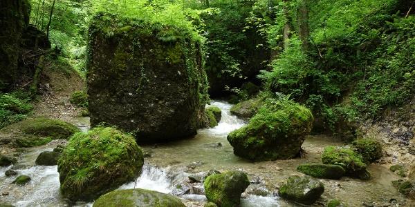 Bewachsene Felsen nahe der Brandenfelshöhle.