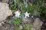 With a little luck you may see some Edelweiss for taking a picture