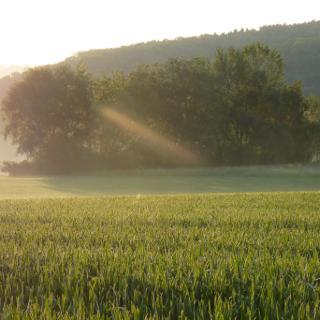 morgens auf dem Campingplatz in Ottensheim