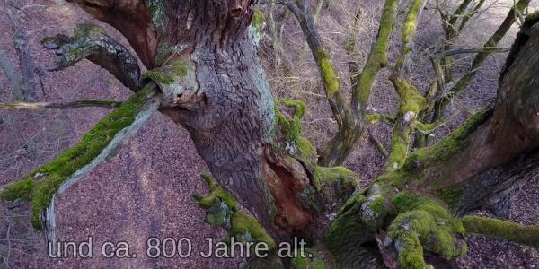 Ausflug zur Alten Eiche bei Garnbach