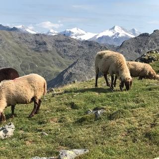 auf der Via Venezia Alpina und am Inntaler Höhenweg - Blick zum Olperer