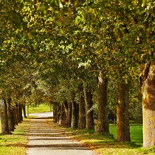 Alte Bäume und Alleen