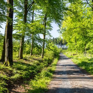 Waldweg im Arnsberger Wald