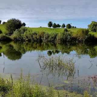 Kennt fast niemand: Auf dem Bruchsaler Golfplatz - eines der drei Wasserreservoirs ist ein schöner See geworden.