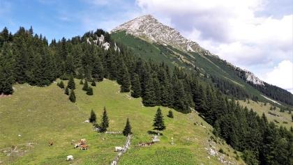 Der Große Pyhrgas vom Hofalmsattel (Blick Richtung Osten)
