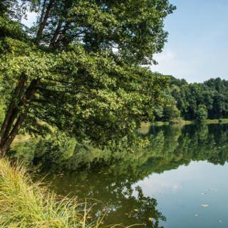 """Der """"Määrchen- Naturwaldpfad"""
