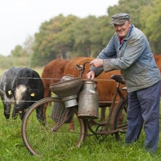 Die glückliche Kuh, Cuxland