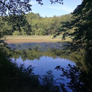Heiligenläger Teich
