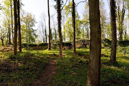 Kurfürstlicher Thiergarten Arnsberg