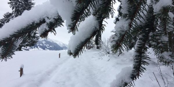 Kurzer Pfad durch den Schnee zur Wittelsbacher Höhe bei Schweineberg