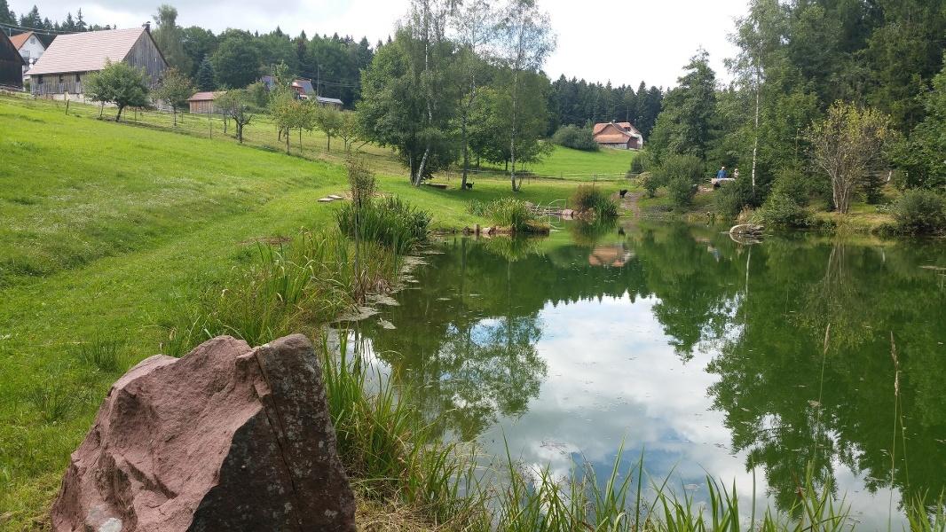Auf der Fährte des Hirsches (Loßburg Ödenwald-Vordersteinwald)