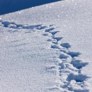 Winterwandern in Warth