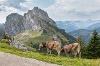 Blick auf den Aggenstein vom Kamm des Breitenbergs - @ Autor: Julian Knacker - © Quelle: Pfronten Tourismus