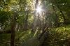 Wanderung durch Allgäuer Bergwald - @ Autor: Julian Knacker - © Quelle: Pfronten Tourismus