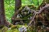Bäume klammern sich an Fels in der Reichenbachklamm - @ Autor: Julian Knacker - © Quelle: Pfronten Tourismus