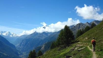 Herrlicher Höhenweg über dem Mattertal.