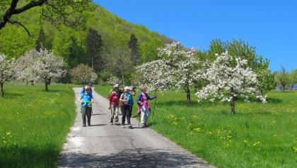 Frühlingswandern zwischen Basel und Solothurn.