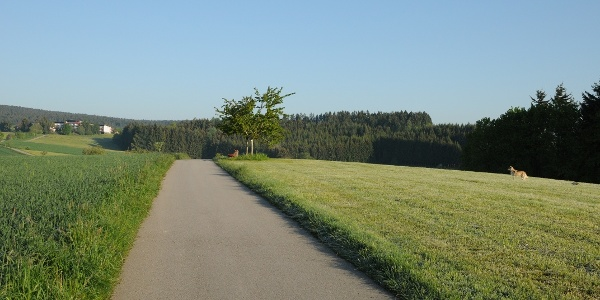 Blick über die Wiesen Richtung Sulzbach