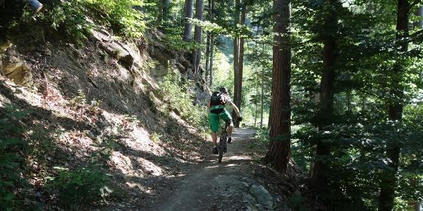 Flowiger Trail zurück in die Stadt Chur
