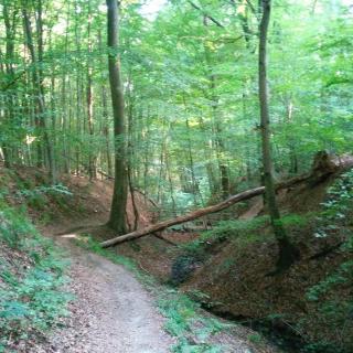Tretschbachtalweg