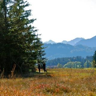 Tiefenberg bog near Ofterschwang