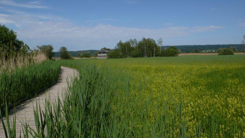 Natur- und Vogelschutzgebiet am Südufer des Ammersees ()