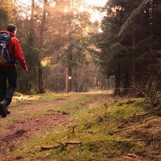Wandern im Balver Wald