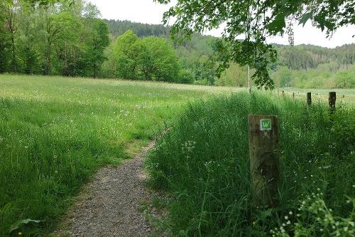 Waldrouten - Etappe Stephanopler Tal - Volkringhausen