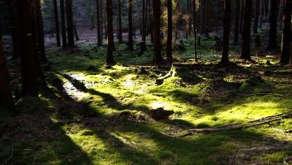 Wald in der Nähe vom Möhnesee