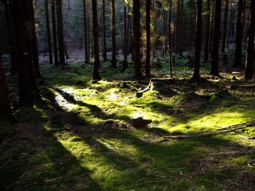 Waldrouten-Etappe Neuhaus - Hirschberg Fürstenkamp