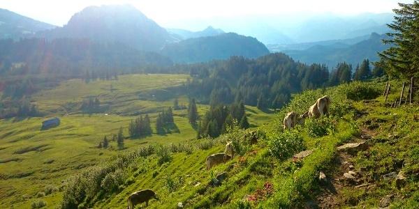 Wanderung am Piesenkopf bei Balderschwang